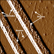 Synthetic biowire making an electrical connection between two electrodes. Source: University of Massachusetts Amherst