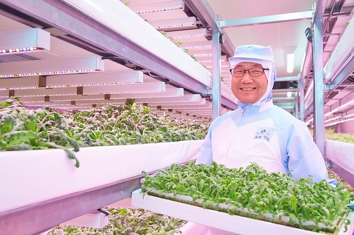 Japanese food vendor Delicious Cook used Philips Lighting to produce edible chrysanthemums and coriander for the company's processed foods. Source: Philips