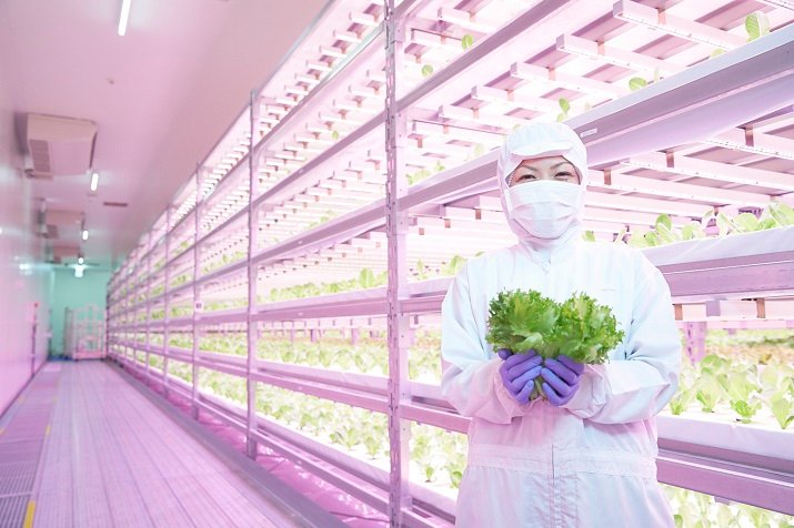 Innovatus Inc. is using Philips Greenpower LED lighting to grow lettuce, producing about 12,000 heads every day. Source: Philips