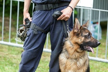 New training techniques based on real-time analysis of what a dog smells could improve explosives detection. Image credit: wellphoto/Shutterstock.com