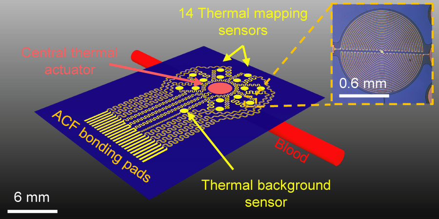 The epidermal sensing device combines a thermal actuator and a radial array of 14 temperature sensors made of ultra-thin layers of gold, chromium, and copper, providing the flexibility required to allow the device to comfortably conform to the surface of the skin. (Source: R. Chad Webb, Department of Materials Science and Engineering, University of Illinois at Urbana-Champaign)
