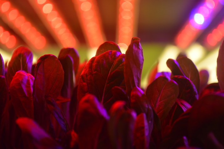 AeroFarms uses abandoned buildings for its vertical farms as well as color patterned LED lighting to match each plant with the best lighting for growth. Source: AeroFarms