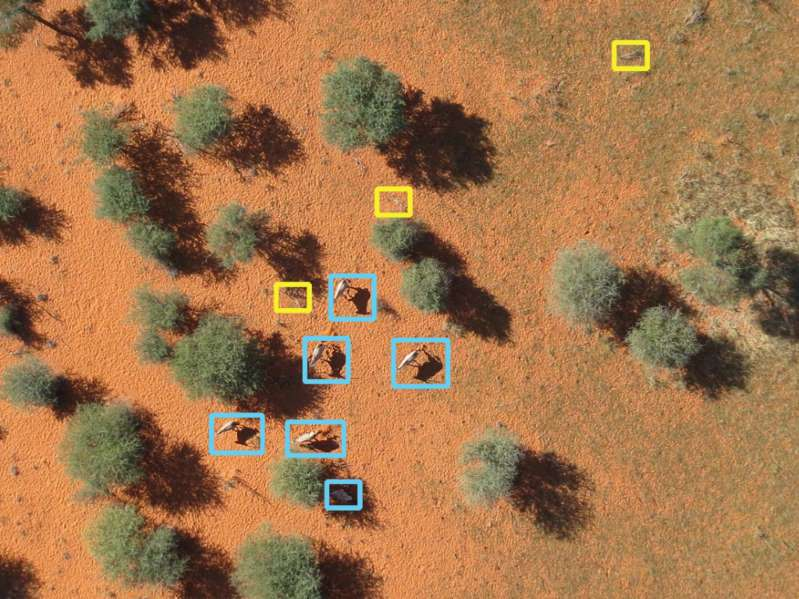 A photo taken by the drone and analyzed by the AI system. Source: SNSF