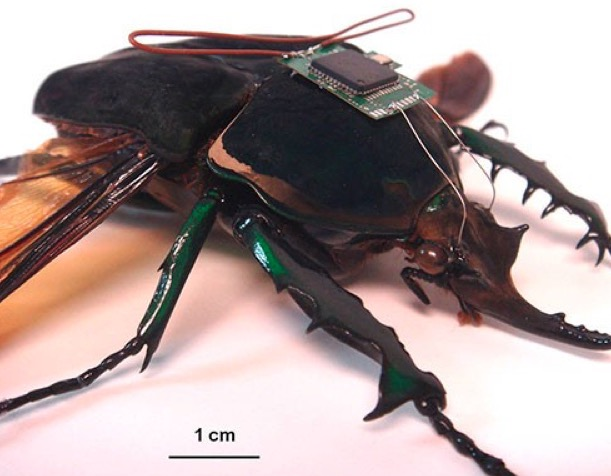 A DARPA-inspired weaponized insect. Source: DARPA