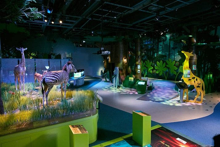 LED lighting was added to new exhibits, including Mangrove Forest, Forest Trail, Woodlands Diorama, Sunrise in the Savana Diorama and the Sandy Beach Diorama. Source: Altman Lighting
