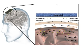 "The new system will use microdevices to both ""read out"" and ""write in"" neural information. (Source: Brown University)"