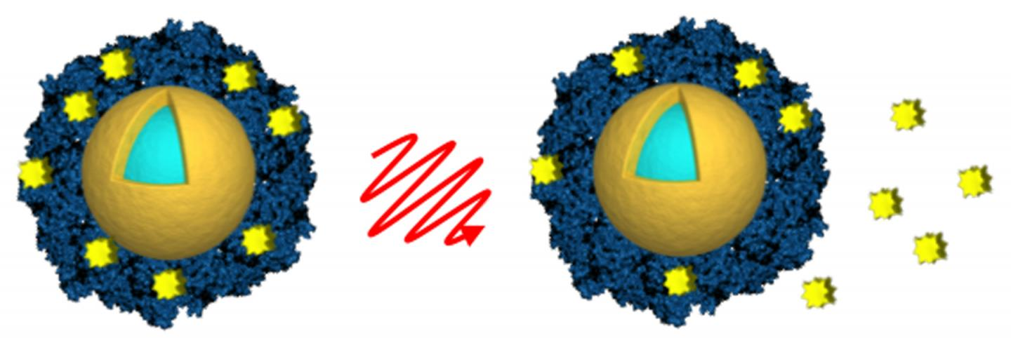 Researchers from Rice University and Northwestern University loaded light-activated nanoshells (gold and light blue) with the anticancer drug lapatinib (yellow) by encasing the drug in an envelope of albumin (blue). Light from a near-infrared laser (center) was used to remotely trigger the release of the drug (right) after the nanoshells were taken up by cancer cells. Source: A. Goodman/Rice University