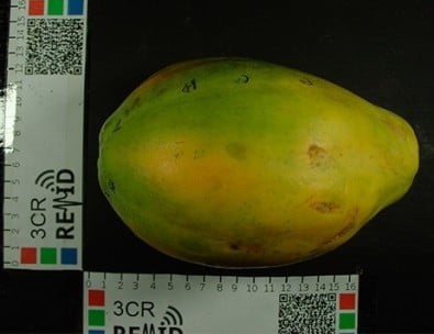 Brazilian researchers develop a system that analyzes agricultural products to identify different stages in fruit ripening. (Source: FEA-UNICAMP)