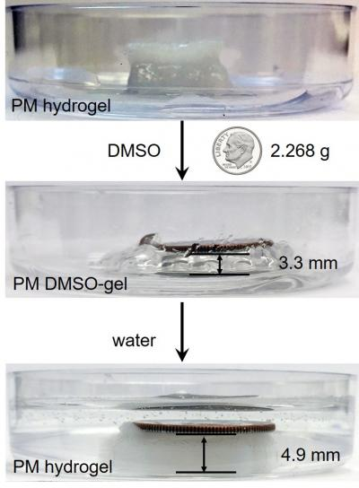 A 3-D printed gel structure lifts and lowers a coin when exposed to water and a DMSO solvent. Source: Dartmouth University