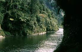 A view of the Whanganui River Credit: Wikipedia