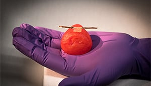 Researchers can attach sensors to the organ models to give surgeons real-time feedback on how much force they can use during surgery without damaging the tissue. Source: McAlpine Research Group