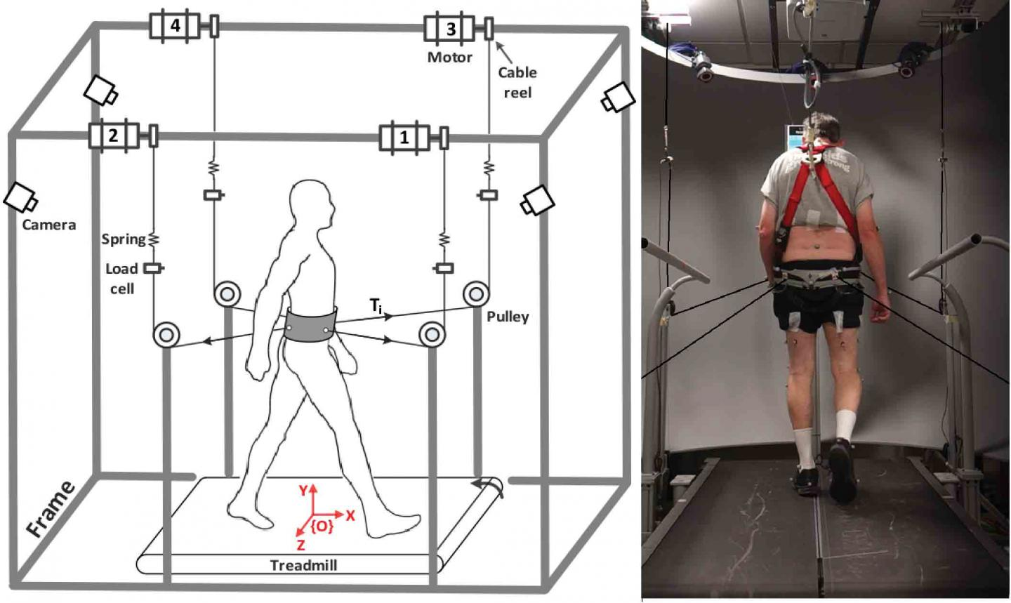 Schematic of Columbia Engineering's robot-driven Tethered Pelvic Assist Device with a subject using the TPAD training method to improve stability in Parkinson's disease patients while walking. Source: Sunil Agrawal/Columbia Engineering