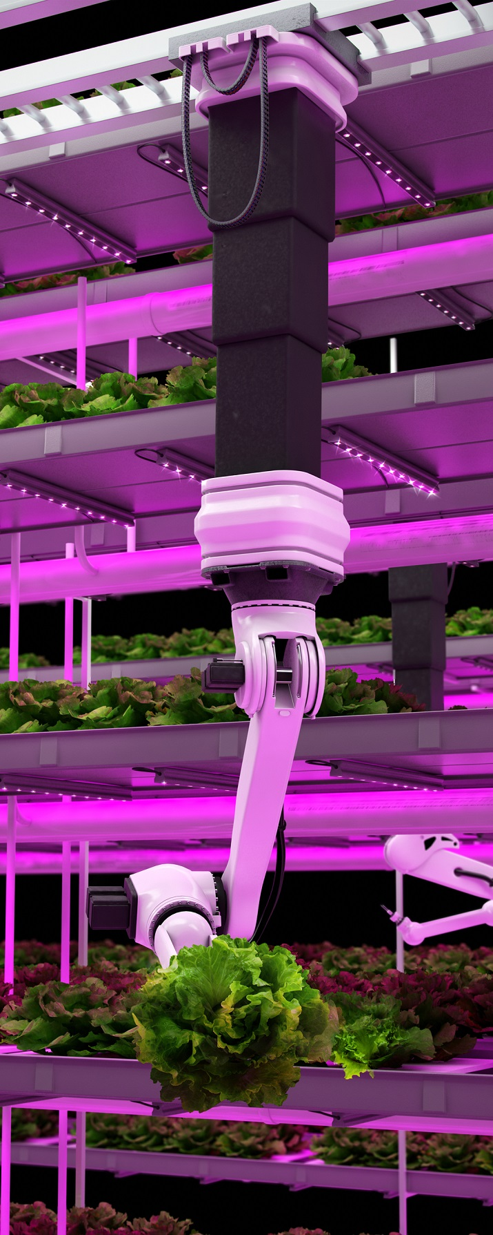 As part of its vision for a smart city, urban farms using LED lights would be able to provide food year-round for a growing number of citizens. Source: Philips Lighting