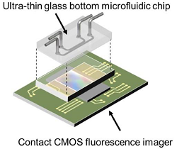 A diagram of the on-chip fluorescence imaging platform showing how the ultra-thin glass bottom microfluidic chip sits on top of the contact CMOS fluorescence imager. (Credit:Takehara et al)